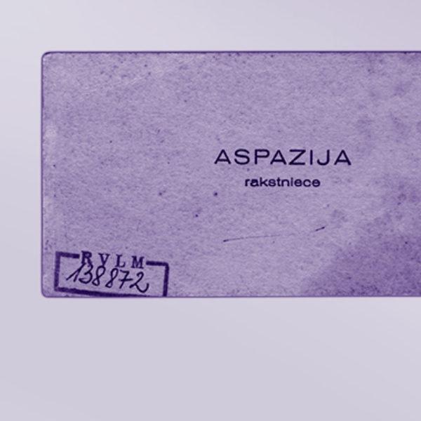 Aspazijas vēstulīte uz vizītkartes